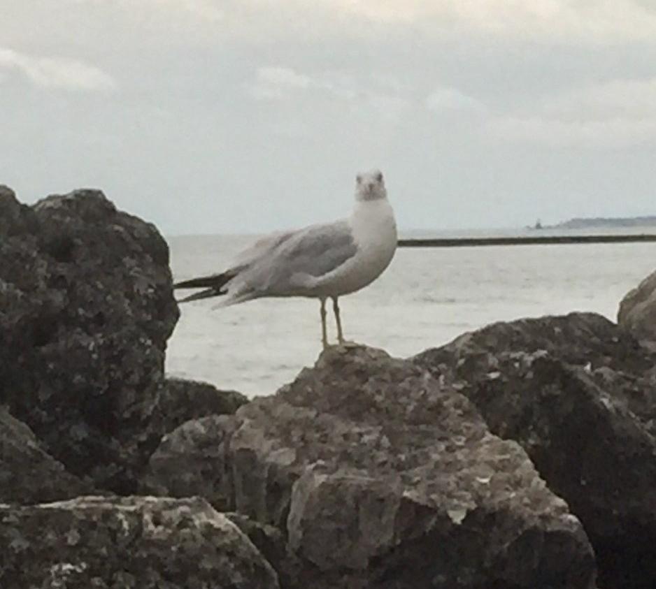 bird-on-rocks-1-e1568718773967.jpg