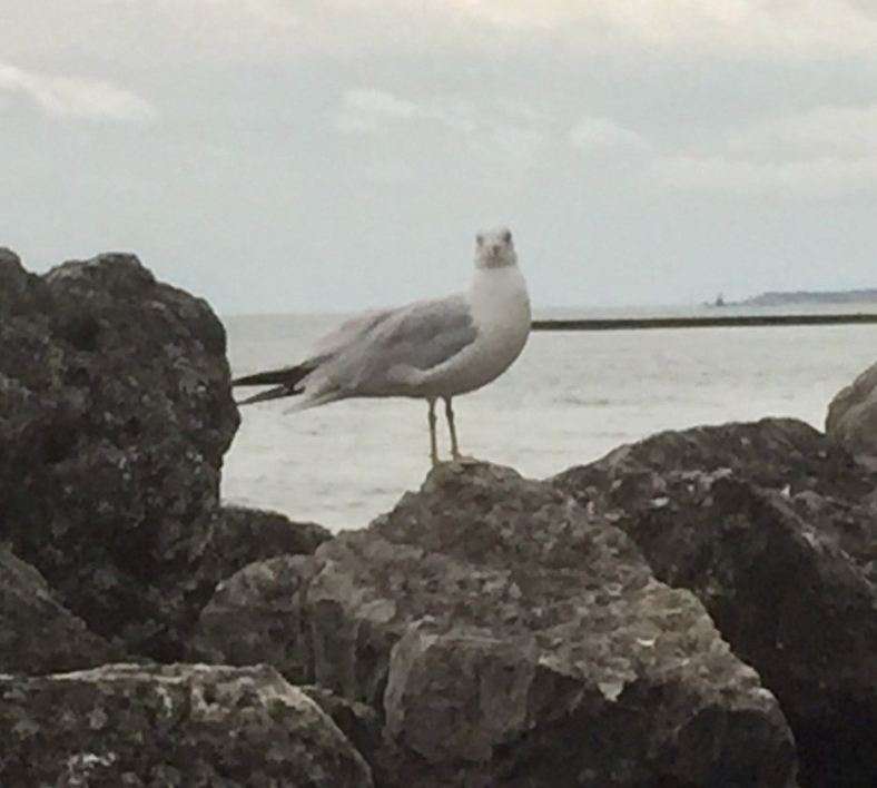 bird-on-rocks-1-e1568718773967.jpg