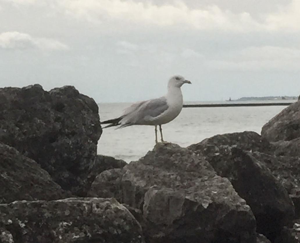 bird-on-rocks-2.jpg