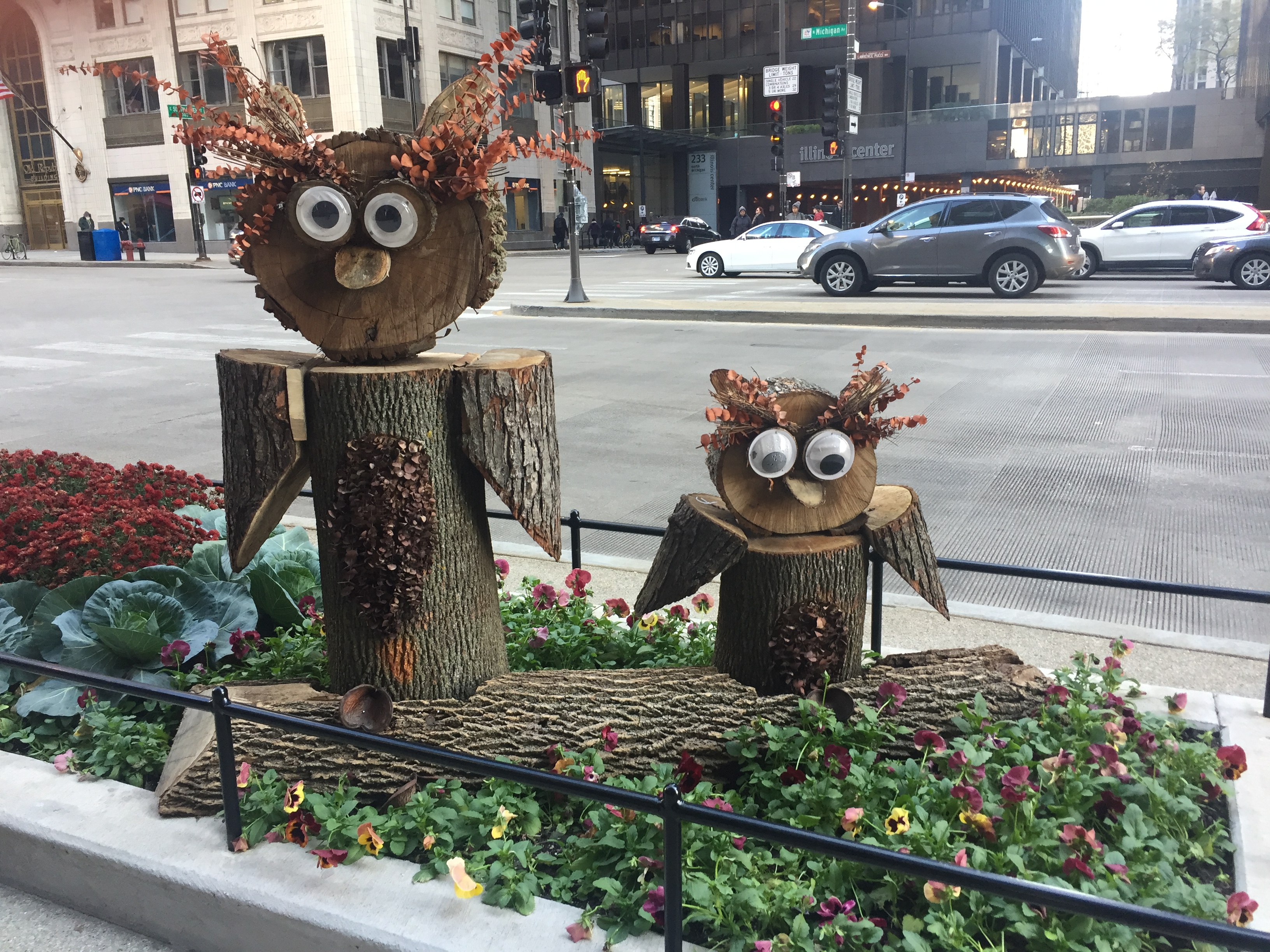 Owls in Chicago 1